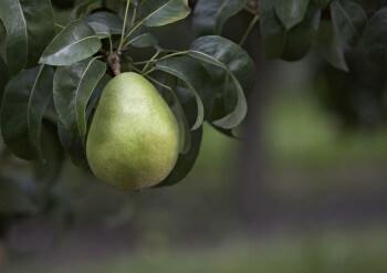 Anjou Branch